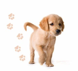 4 Stück Wasserfeste Autoaufkleber / Fensterbild / Wandtattoo - Hundepfoten - schwarz - Aufkleber Folien Sticker Pfötchen, Pfotenaufkleber fürs Auto oder Wandsticker, PKW, Wohnmobil, Decal Flower Autotattoos Hund