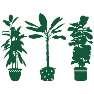 Wandkings Wandtattoo, schöne Topfpflanzen - Farbe und Größe wählbar